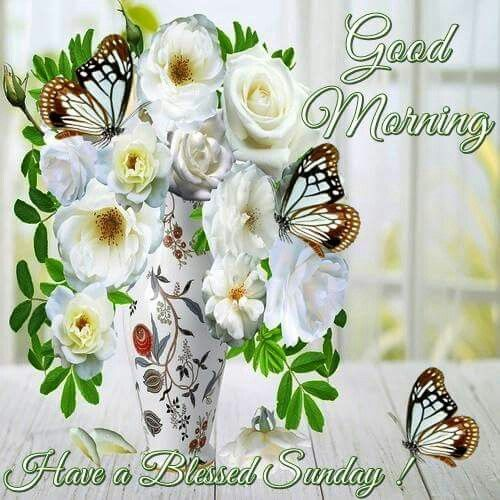 Good Morning Happy Sunday Flowers Flowers Healthy